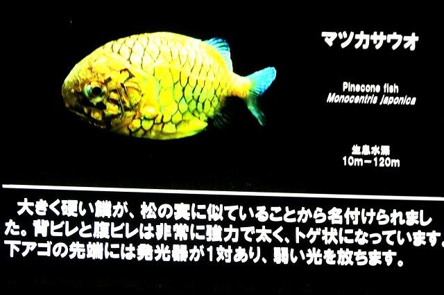 深海水族館-47