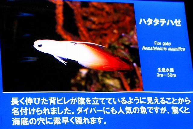 深海水族館-49