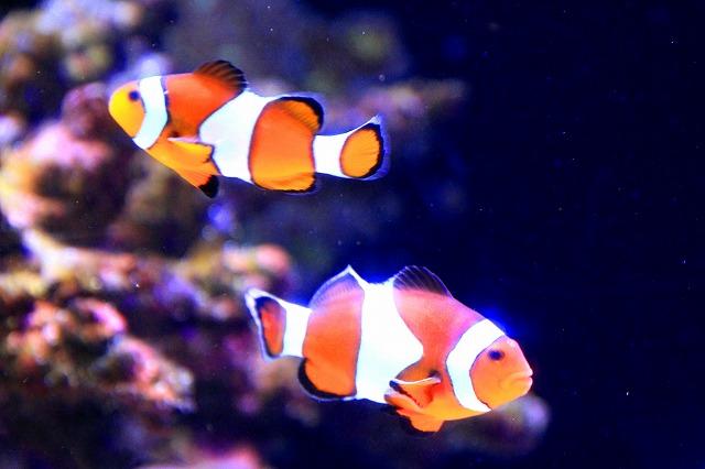 深海水族館-50