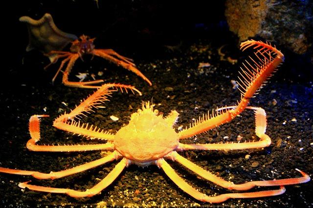 深海水族館-54