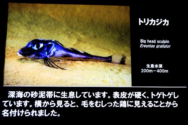 深海水族館-59