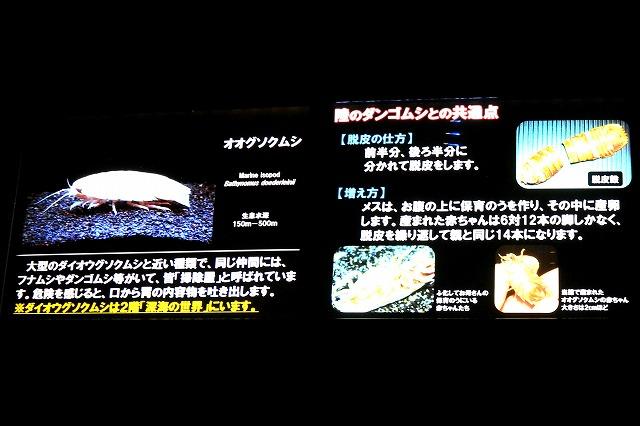 深海水族館-61