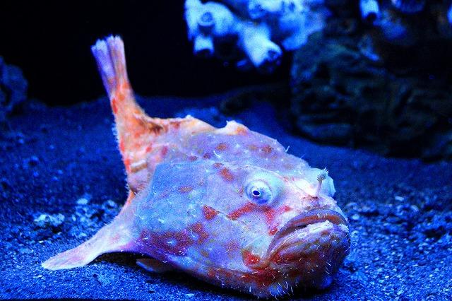 深海水族館-62