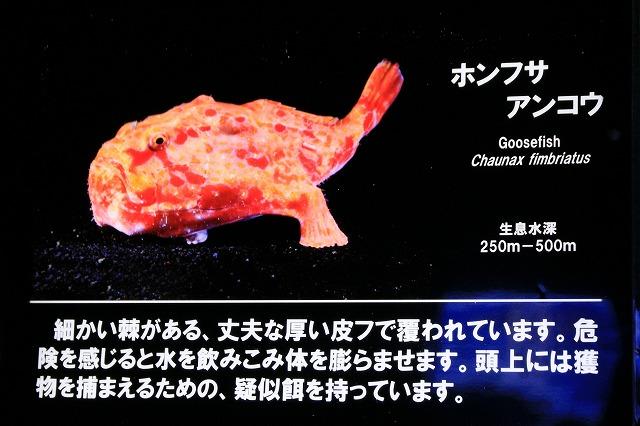 深海水族館-63