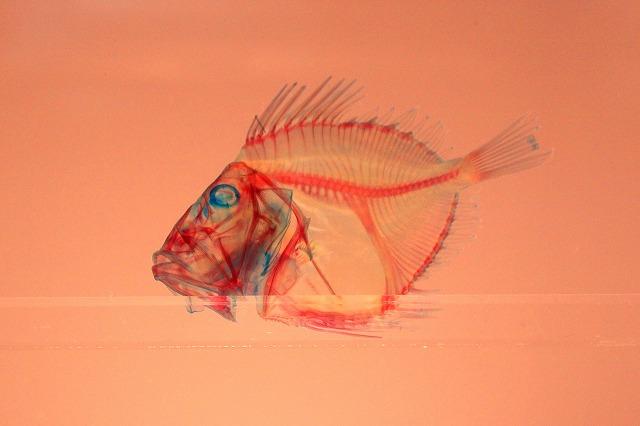 深海水族館-66