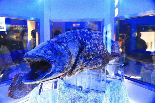 深海水族館-84