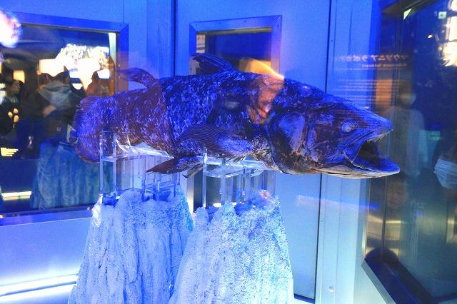 深海水族館-85