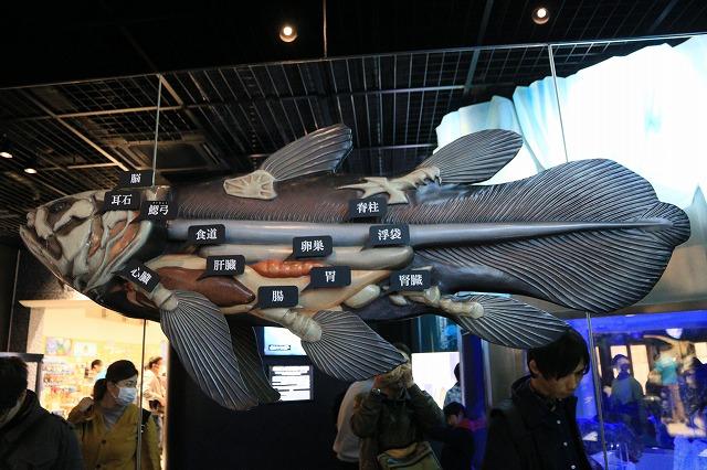 深海水族館-86