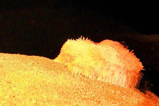 深海水族館-116
