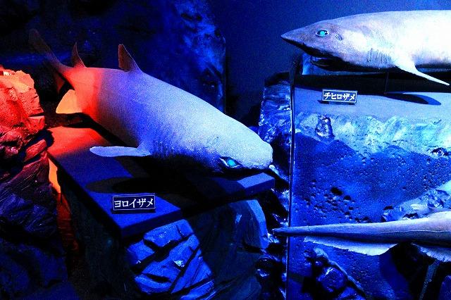 深海水族館-132