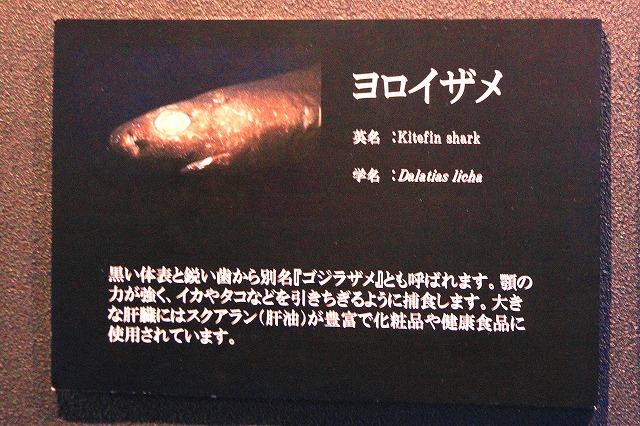 深海水族館-133