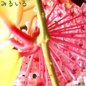 花の後ろもこんなに可愛いのかっ!!|手作りアクセサリー工房みるいる