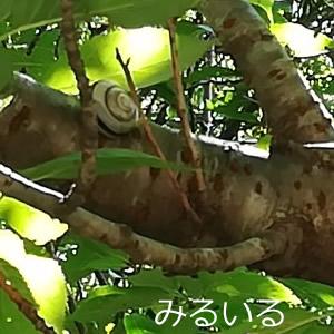 桜の木の枝でヒトヤスミ|手作りアクセサリー工房みるいる