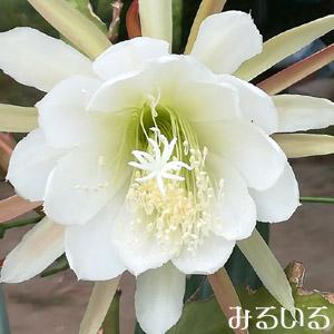 今まさに花盛り!ばんばん次々咲く目覚めるような鮮やかさ|手作りアクセサリー工房みるいる
