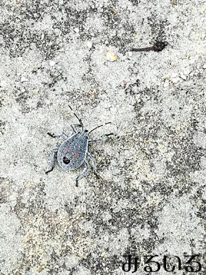 何の昆虫かわからないけど、、いや、カメムシかなぁ??でもちょっとかわいく見えたので撮ってみました♪|手作りアクセサリー工房みるいる