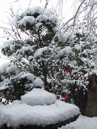 2010.12.26014.jpg