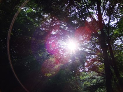 太陽3.jpg