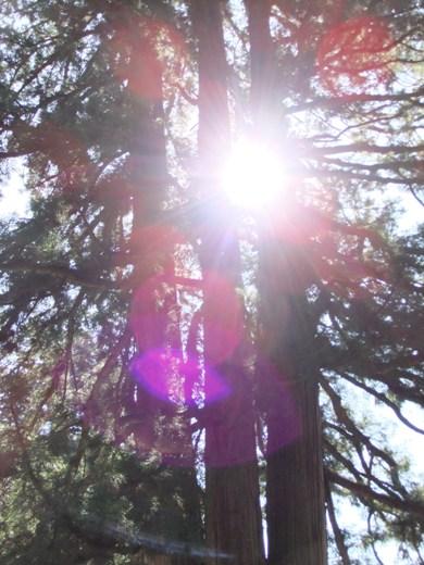 三本杉2.jpg