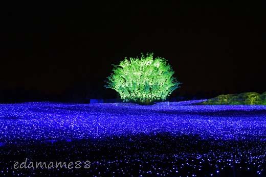 2011_11_18_6037.jpg