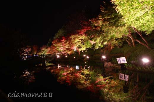 2011_11_18_6078.jpg