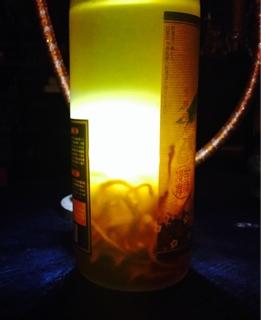 冬虫夏草酒