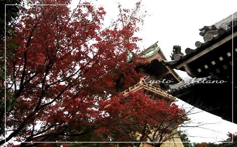 祇園閣 紅葉