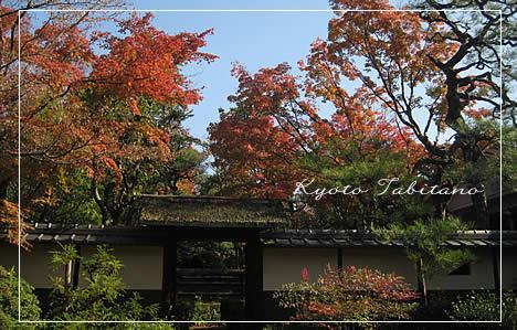 松花堂庭園 紅葉