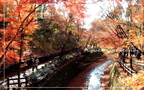 北野天満宮 紅葉