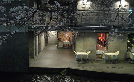 チェントチェント 桜