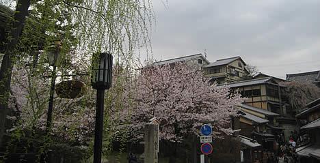 興正寺 桜