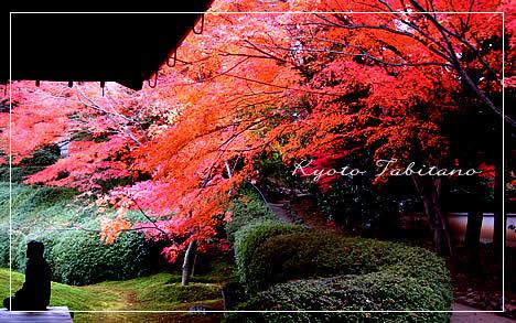 光明院 波心の庭