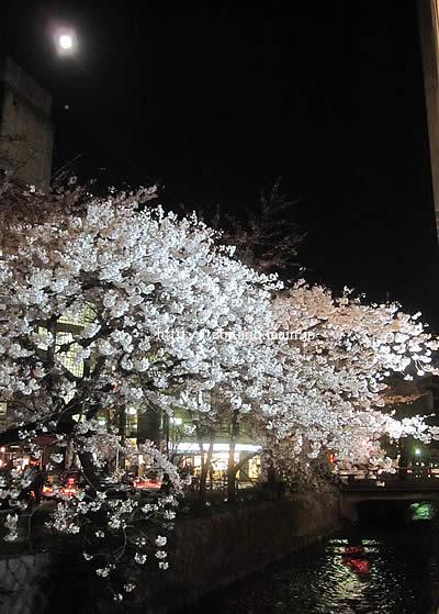 京都 月と桜