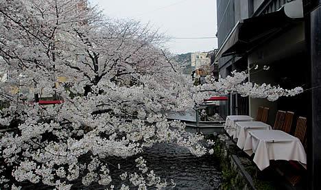祇園白川 桜