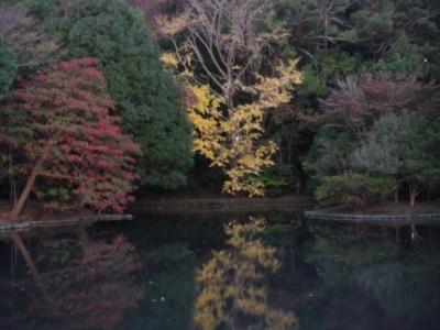 水面に映るイチョウの木