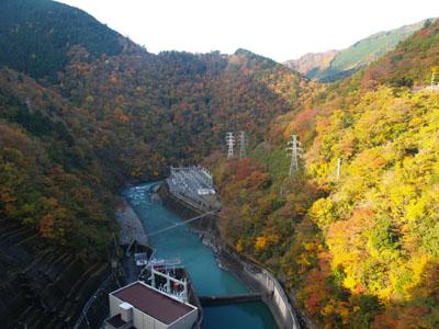 井川ダム天端から下流の紅葉を眺める