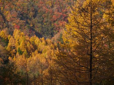 井川雨畑林道の紅葉