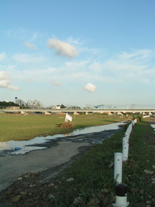 増水の後の多摩川200709