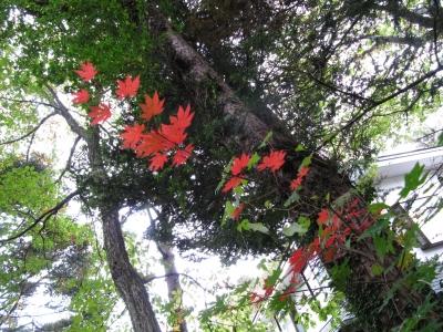 もとす周辺の秋