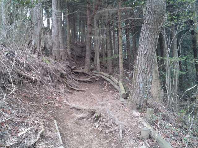 竜ヶ岳登山6