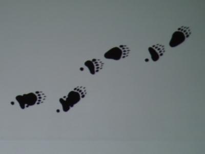 ひぐまの足跡