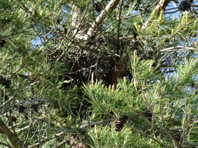 鳥の巣発見1