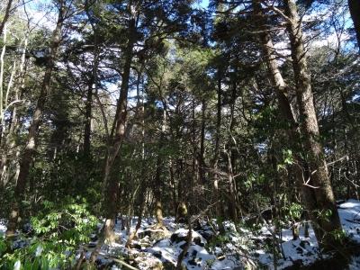 樹海の雪1