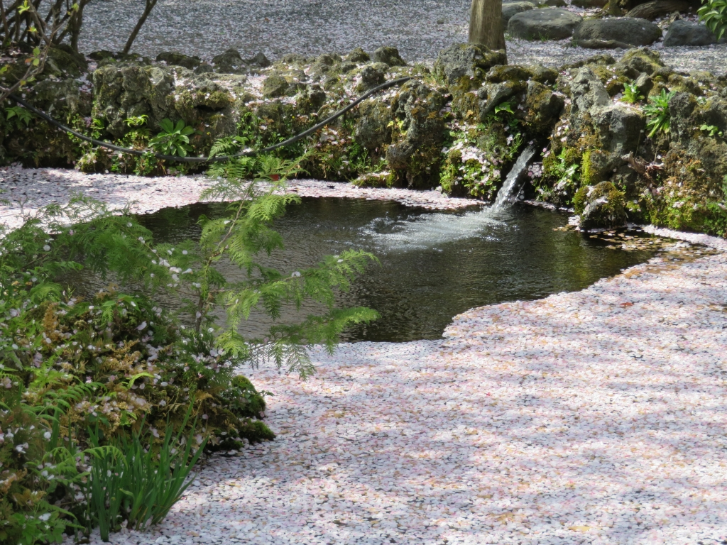 本宮桜の池