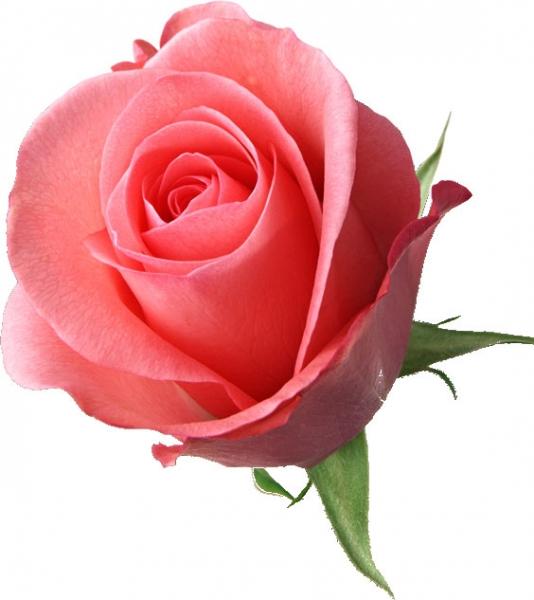 結婚披露宴の装花 ピンクのバラ