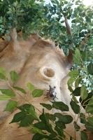 保育園擬木