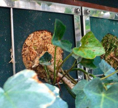 壁面植栽の植え込み穴