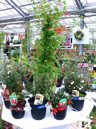 クリスマス用の花材