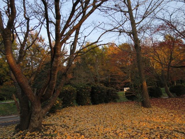 2014-11-27 16.41.13.jpg