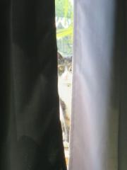 窓辺のレンたん