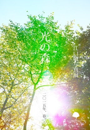 光の森_DM.jpg